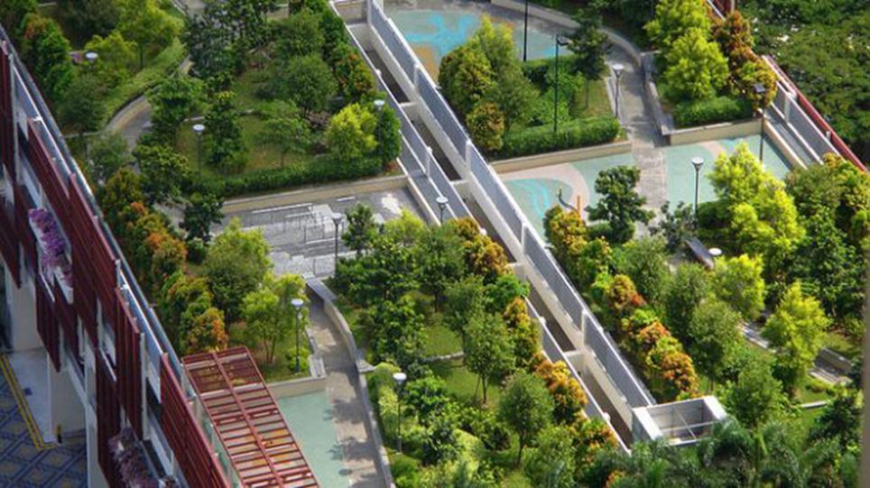 Recife-telhado-verde