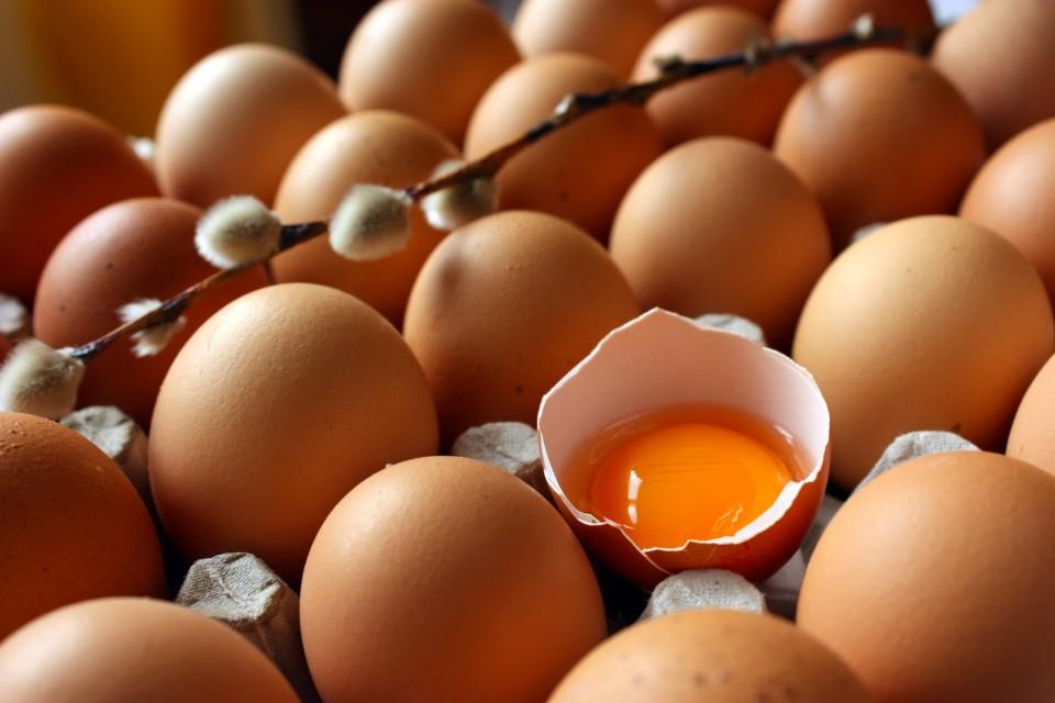 eggy01
