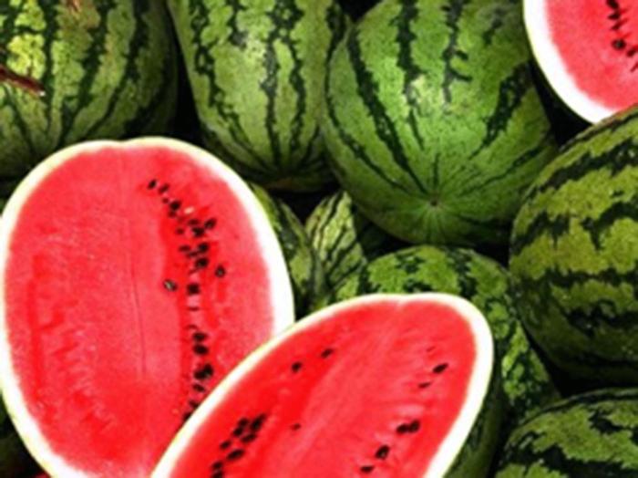 Da melancia ao milho, agricultores apostam em soluções naturais para aumentar a produtividade