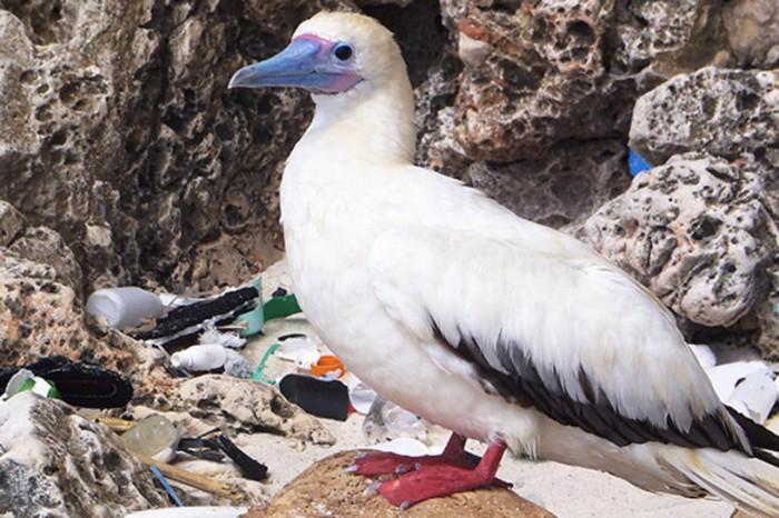 aves--plastico