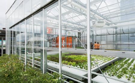 Empresa quer cultivar alimentos orgânicos nos telhados de prédios de SP