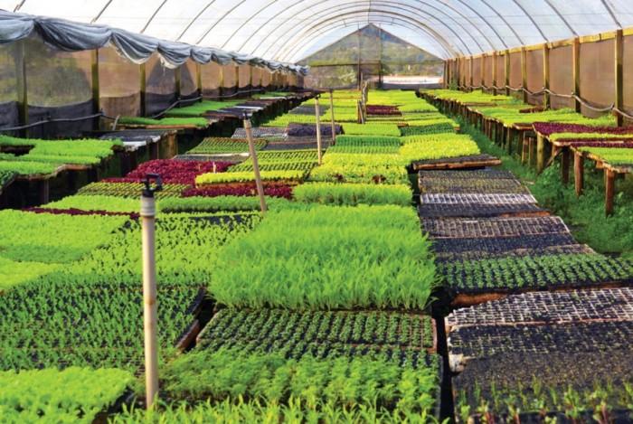 Projeto sustentável gera economia e garante estabilidade para empresa do agronegócio