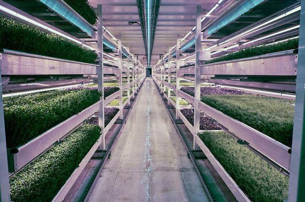 Antigo depósito de bombas é transformado em horta orgânica subterrânea