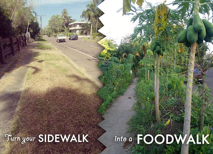 Projeto incentiva cultivo de alimentos orgânicos na calçada