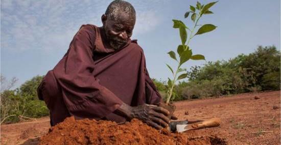 Aos 67 anos, este homem transformou 30 hectares de deserto em terras cultiváveis