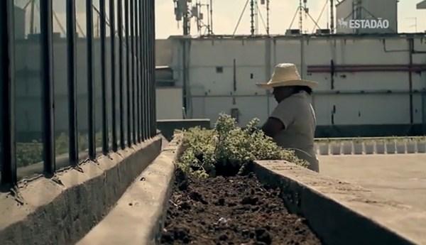 Profissões do Futuro: agricultura urbana