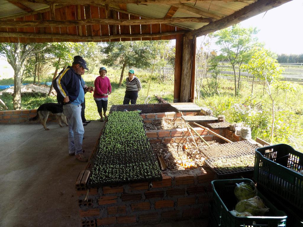 Na capital da soja, assentados driblam uso de agrotóxicos e investem na produção orgânica