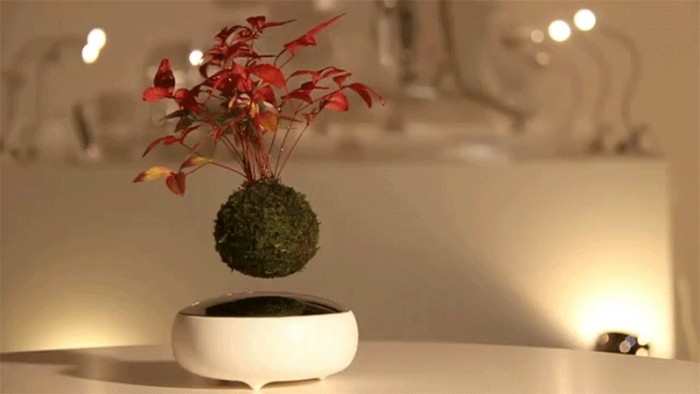 Air-Bonsai-Arquitetura-Sustentavel