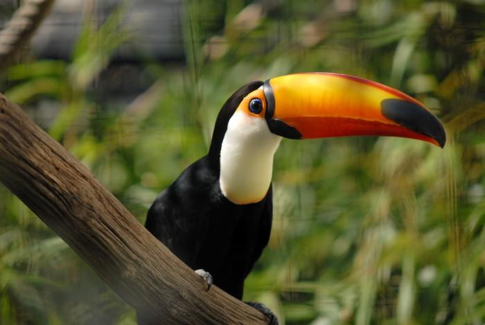 Sentados em ouro: por que ainda não aproveitamos a Biodiversidade?