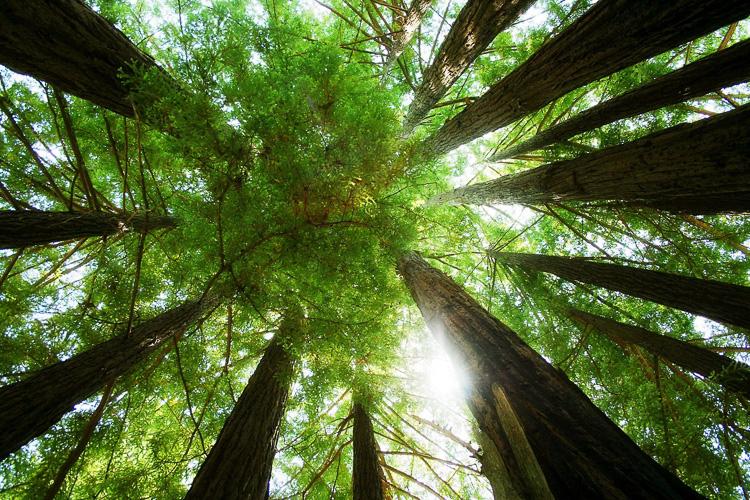 Oportunidade: Três cursos online e gratuitos sobre sustentabilidade