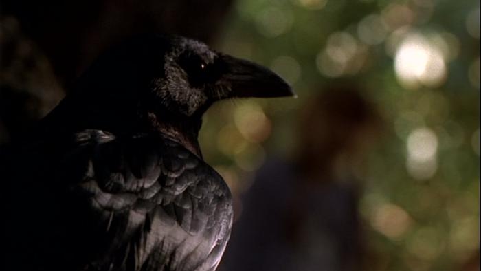 Pássaros podem teorizar sobre a mente dos outros, mesmo aqueles que não enxergam: estudo