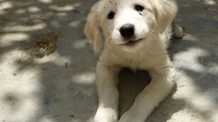 Em SC, quem adotar animal abandonado terá desconto no IPTU