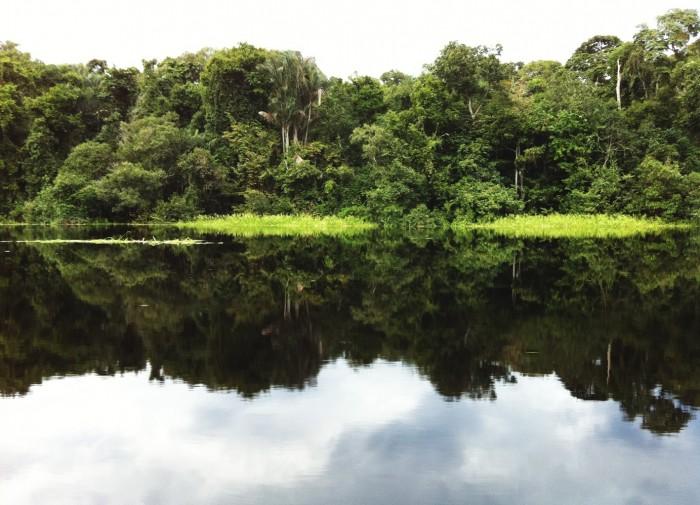 Estudo sobre mudança das cadeias alimentares aquáticas da Amazônia será concluído em 2017