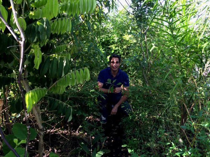 pocket-forest-ricardo-cardim-janeiro-de-2016