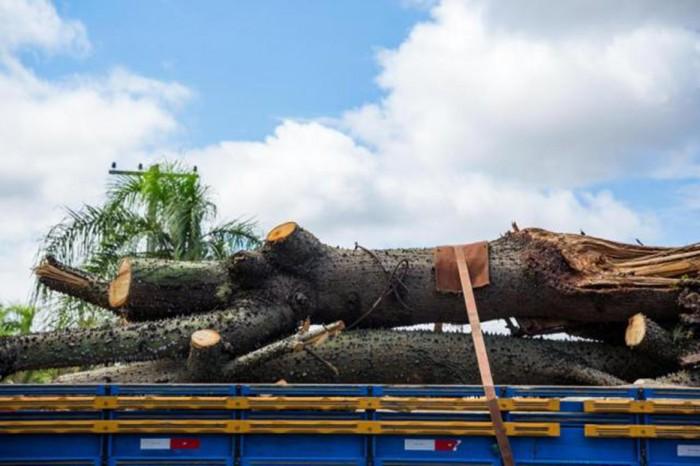 O prejuízo ambiental de Porto Alegre após a tempestade que derrubou suas árvores