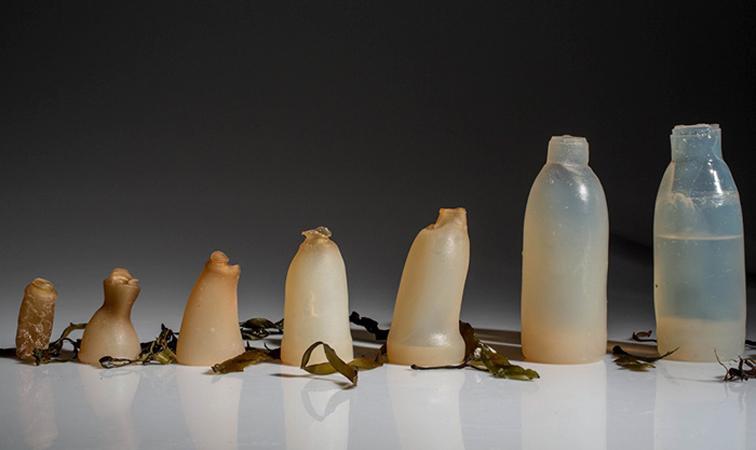 Estudante cria garrafas de água biodegradáveis feitas com algas como alternativa ao plástico