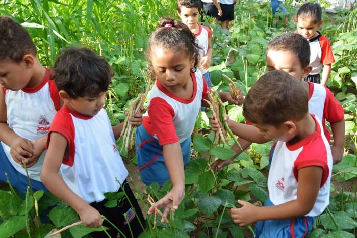 Educação ambiental pode ser disciplina obrigatória no ensino básico