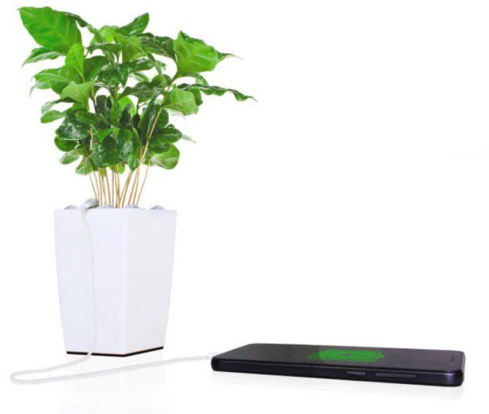 Este vaso carrega o seu celular com energia gerada pelas plantas
