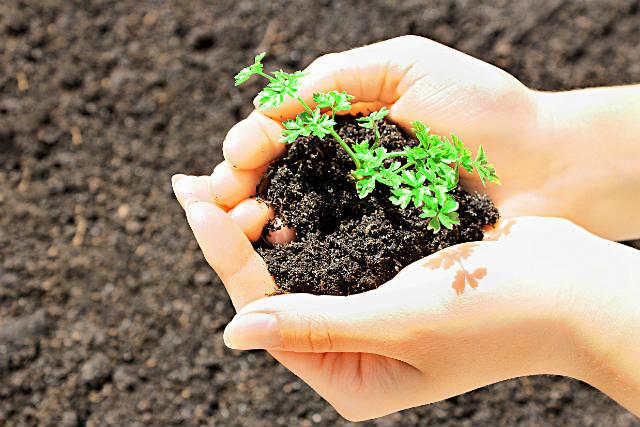 Saiba como preparar um fertilizante natural ou biofertilizante