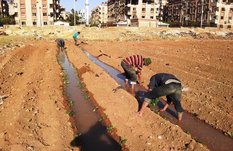 Em guerra, Síria aposta em hortas urbanas para conseguir alimentar população