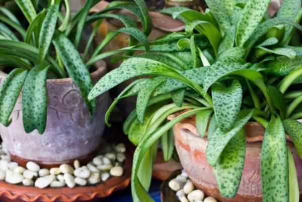 plantas-podem-pensar