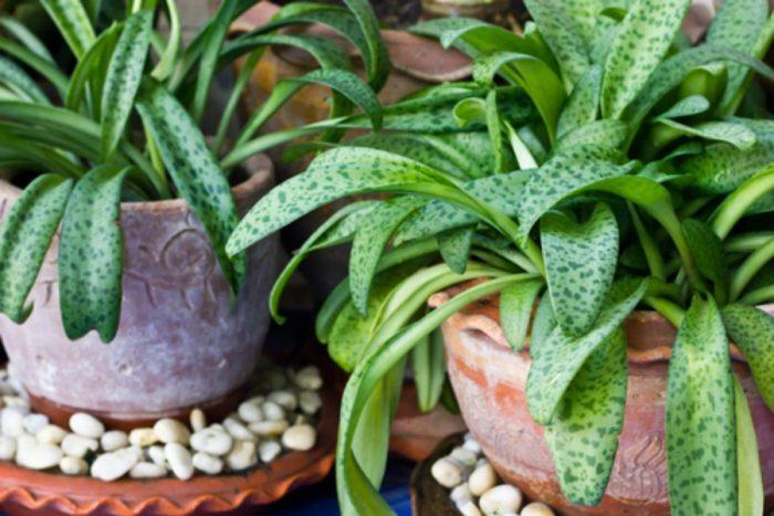 Plantas podem pensar, falar e ler pensamentos, afirma novo estudo
