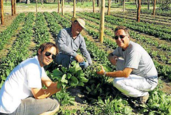 producir-45-mil-kg-de-comida-en-10-hectareas-1-2