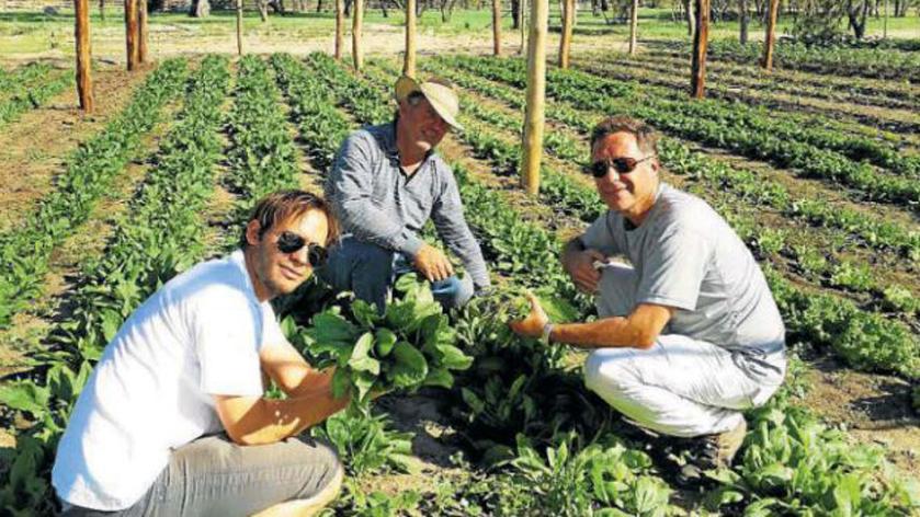 Producir 45 mil kg de comida agroecológica en 10 hectáreas