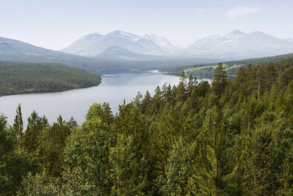 floresta-noruega