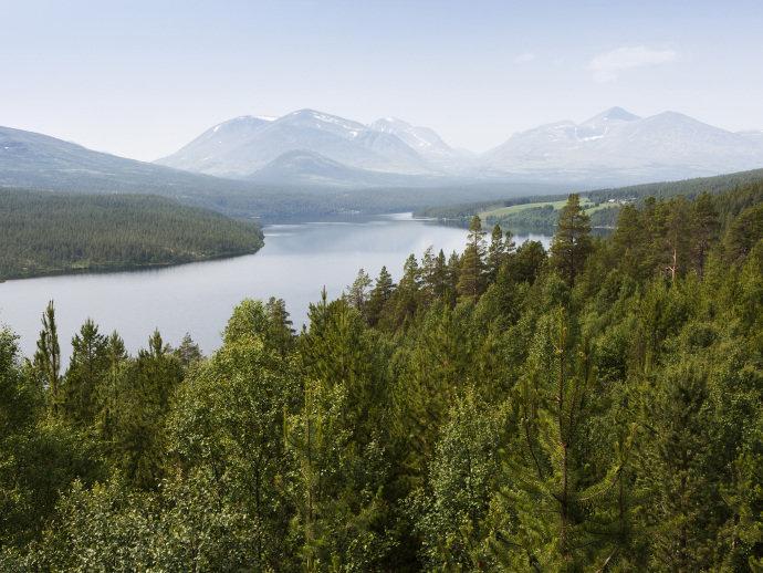 Noruega é o primeiro país do mundo a banir o corte de árvores