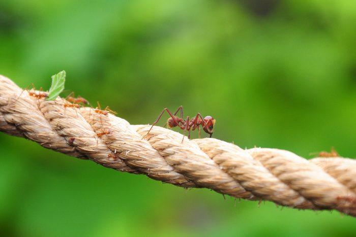 Aprenda com as formigas a planejar cidades para pessoas