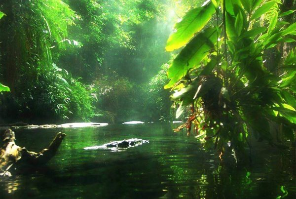amazonia-brasil
