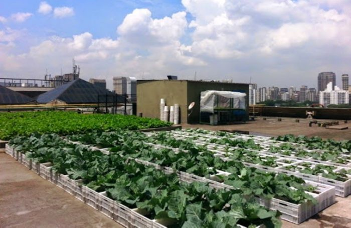 Horta cultivada no topo de shopping de SP oferece alimentos frescos aos funcionários