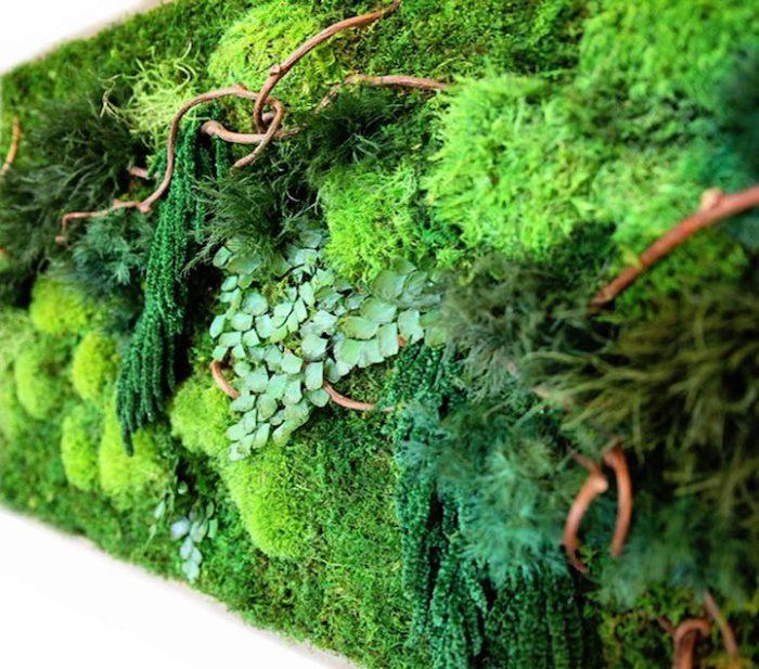 Designer cria quadros ecológicos que trazem naturalidade ao ambiente