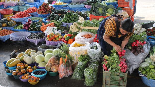 Banco Mundial aposta na agricultura familiar para erradicar a fome