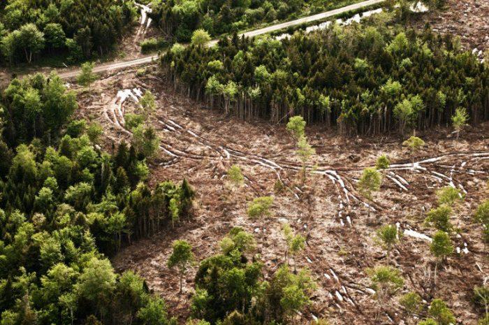 Na Tailândia, aviões 'bombardeiam' sementes e recuperam florestas