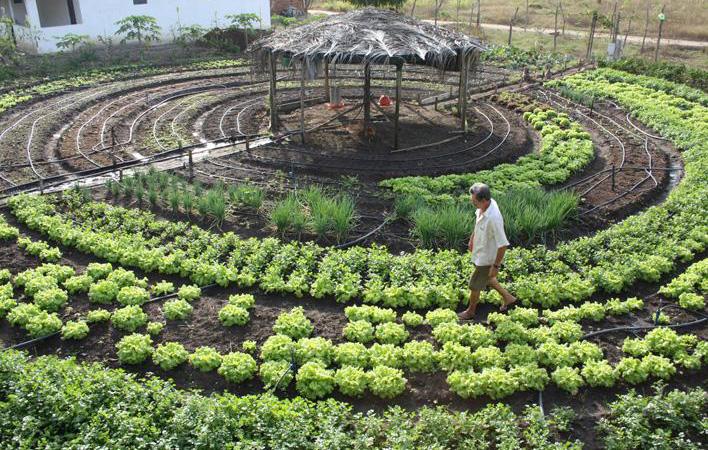 Dinamarca será o primeiro país do mundo 100% orgânico antes de 2020