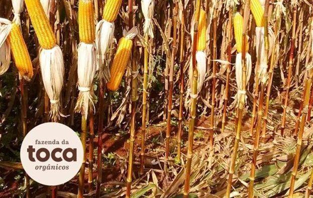 Fazenda em SP mostra viabilidade da agrossilvicultura de grande escala