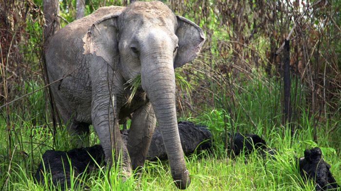 Brasil terá santuário de elefantes na Chapada dos Guimarães