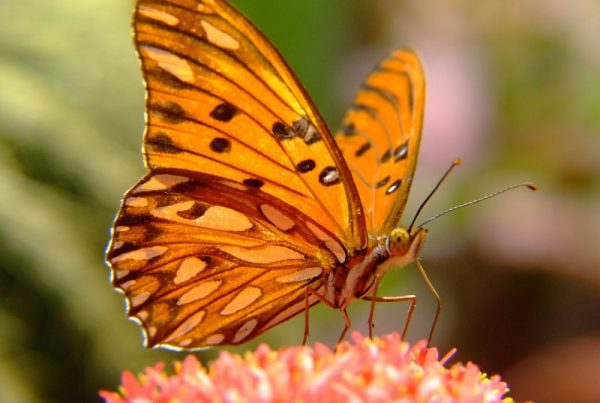 borboleta-primavera