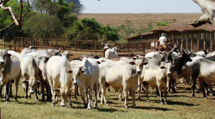 Principais supermercados do país se comprometem a não vender carne de áreas de desmatamento