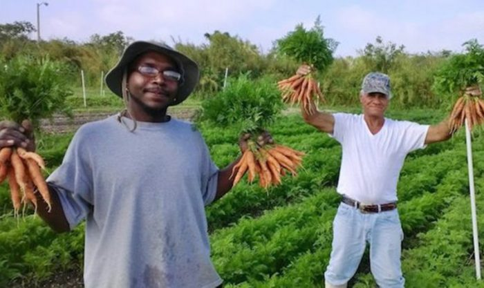A fazenda que só produz alimentos orgânicos (e contrata apenas moradores de rua)