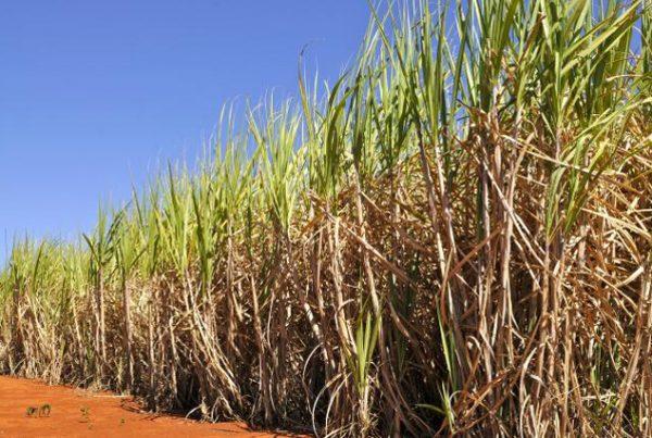 09.01 - CNPEM participa de estudo para desenvolver carvão ativo a partir do bagaço de cana-de-açúcar