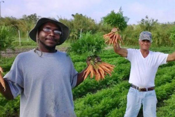 fazenda-organicos-moradores-de-rua-768x433