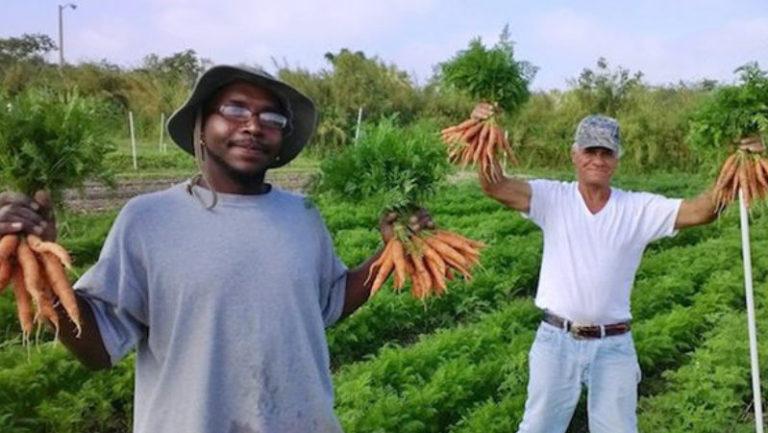 Fazenda que só produz orgânicos contrata apenas moradores de rua