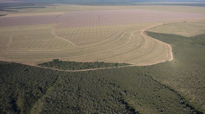 Manifesto pede fim de compra de soja e carne de áreas desmatadas no Cerrado